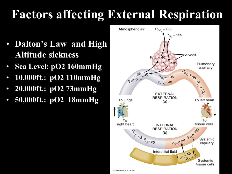 Factors affecting External Respiration Dalton's Law and High Altitude sickness Sea Level: pO2 160mmHg 10,000ft.: pO2 110mmHg 20,000ft.: pO2 73mmHg 50,000ft.: pO2 18mmHg