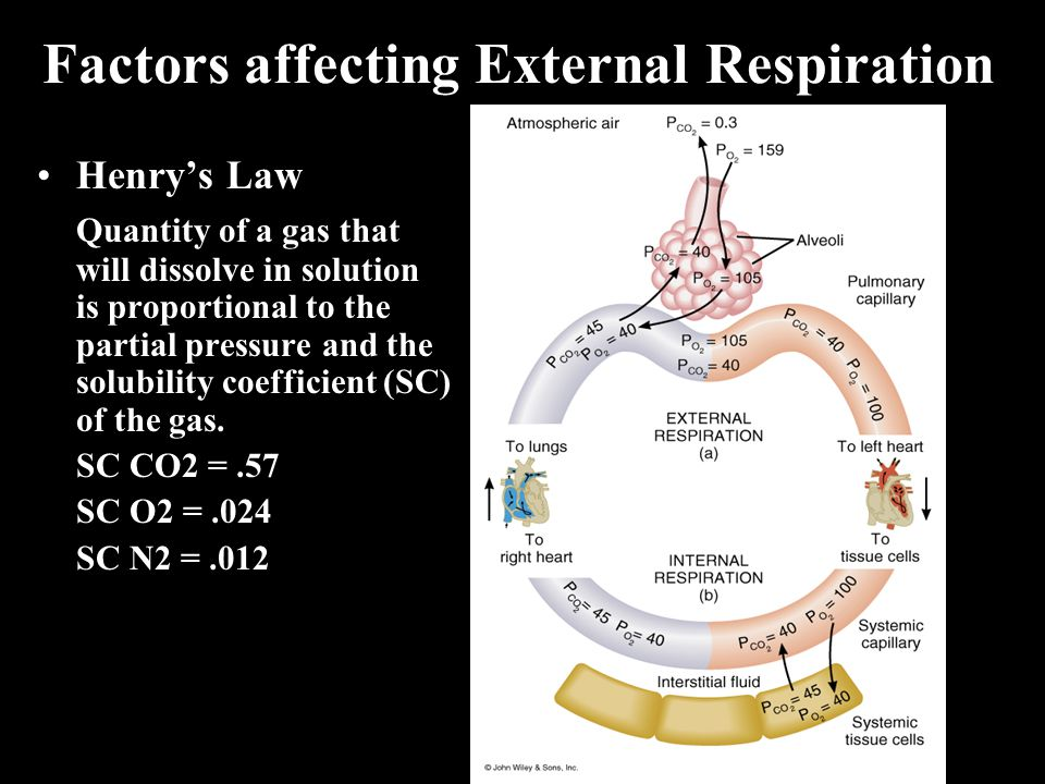 Factors affecting External Respiration Henry's Law Quantity of a gas that will dissolve in solution is proportional to the partial pressure and the solubility coefficient (SC) of the gas.