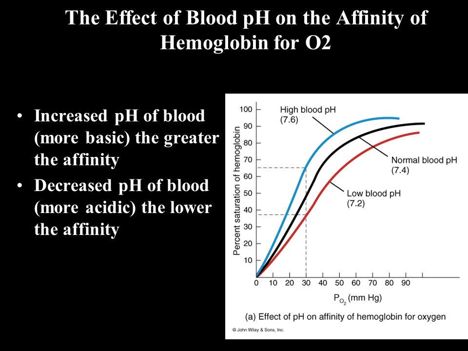The Effect of Blood pH on the Affinity of Hemoglobin for O2 Increased pH of blood (more basic) the greater the affinity Decreased pH of blood (more acidic) the lower the affinity