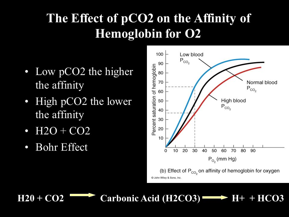 The Effect of pCO2 on the Affinity of Hemoglobin for O2 Low pCO2 the higher the affinity High pCO2 the lower the affinity H2O + CO2 Bohr Effect H20 + CO2 Carbonic Acid (H2CO3) H+ + HCO3