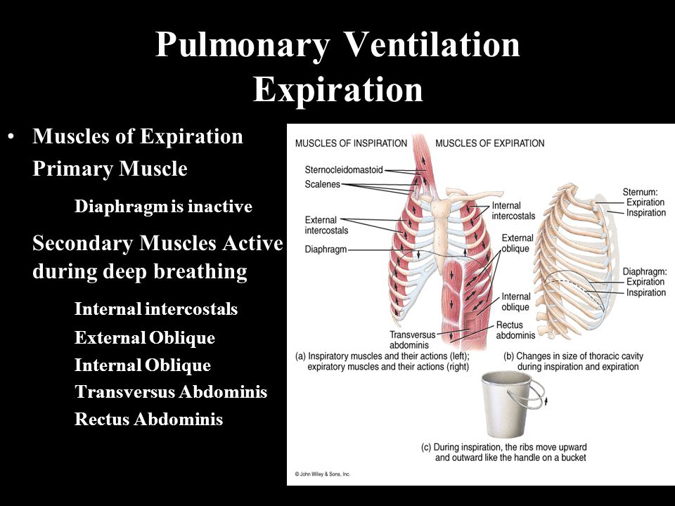 Pulmonary Ventilation Expiration Muscles of Expiration Primary Muscle Diaphragm is inactive Secondary Muscles Active during deep breathing Internal intercostals External Oblique Internal Oblique Transversus Abdominis Rectus Abdominis