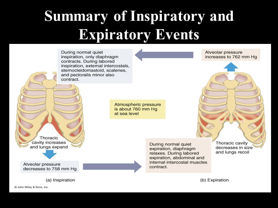 Summary of Inspiratory and Expiratory Events