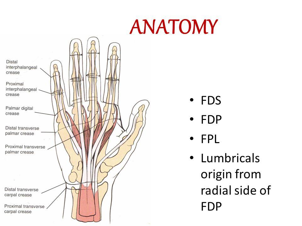 Cut Wrist Flexor Tendon Injury Ramy El Nakeeb Md Orthopaedic