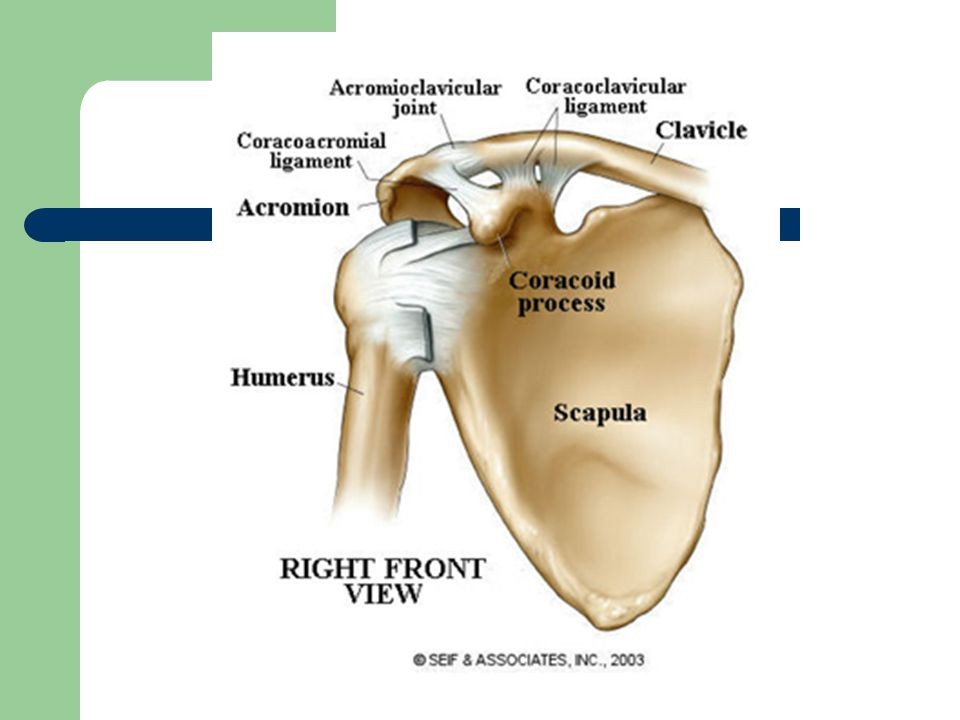 Upper Extremity Injuries Ppt Video Online Download
