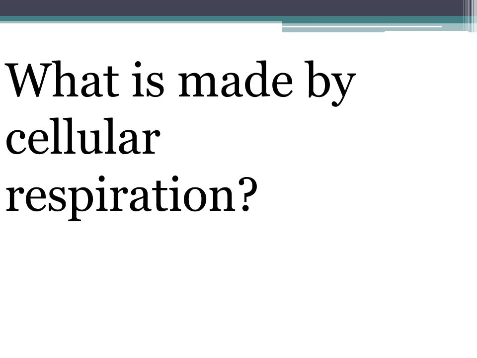 What is made by cellular respiration
