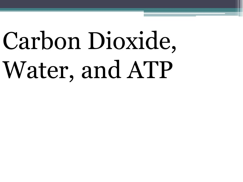 Carbon Dioxide, Water, and ATP