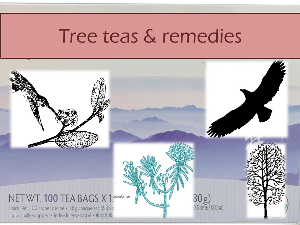 Tree teas & remedies