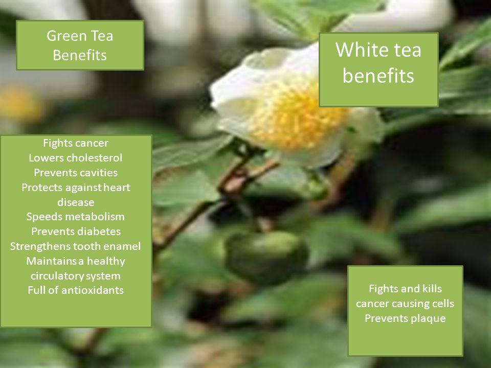 Green Tea Benefits Fights cancer Lowers cholesterol Prevents cavities Protects against heart disease Speeds metabolism Prevents diabetes Strengthens tooth enamel Maintains a healthy circulatory system Full of antioxidants White tea benefits Fights and kills cancer causing cells Prevents plaque