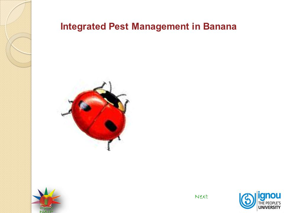 Integrated Pest Management in Banana Next
