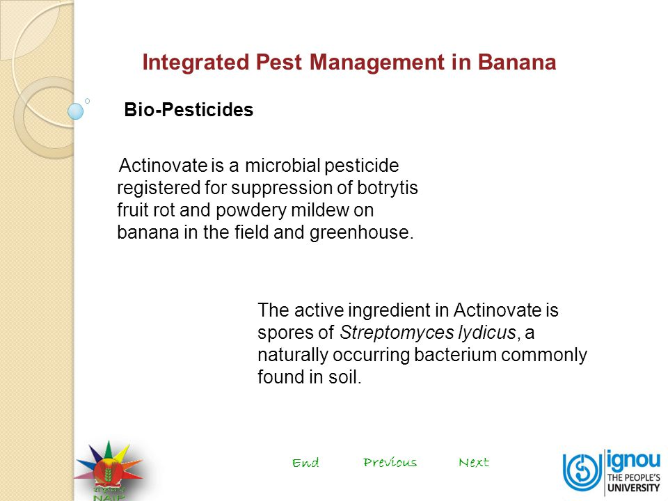 Integrated Pest Management in Banana Bio-Pesticides Actinovate is a microbial pesticide registered for suppression of botrytis fruit rot and powdery mildew on banana in the field and greenhouse.