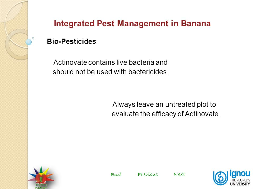 Integrated Pest Management in Banana Bio-Pesticides Actinovate contains live bacteria and should not be used with bactericides.