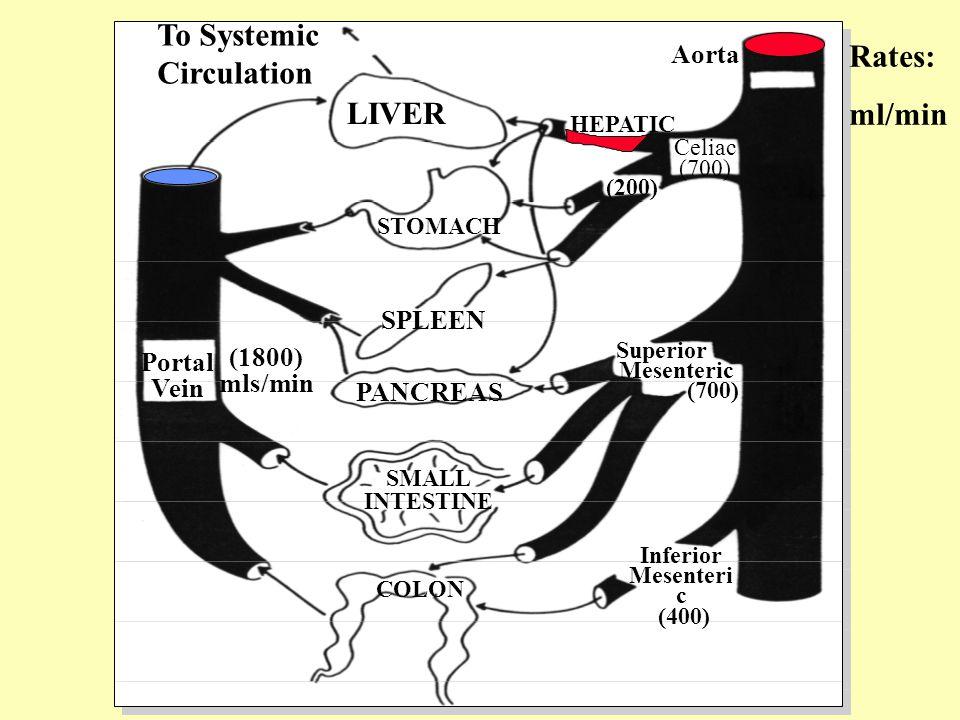 Sublingual Salivary Glands Submaxillary Liver Gallbladder Duodenum