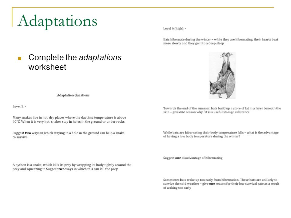 Adaptation To Daily Seasonal Changes D Crowley Ppt Download