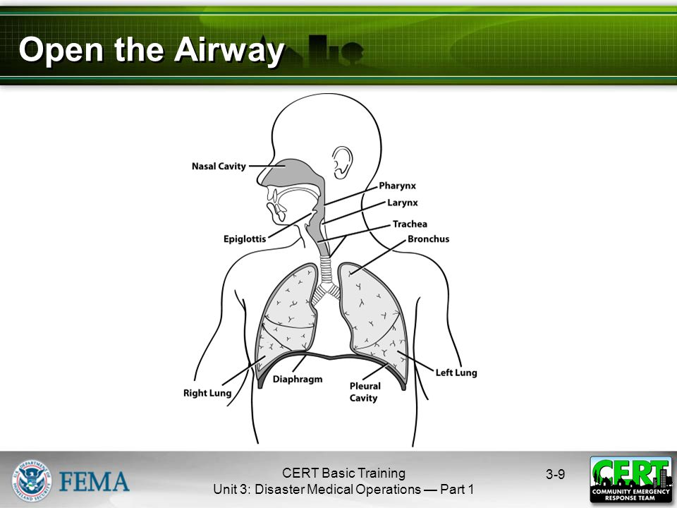 CERT Basic Training Unit 3: Disaster Medical Operations — Part Open the Airway