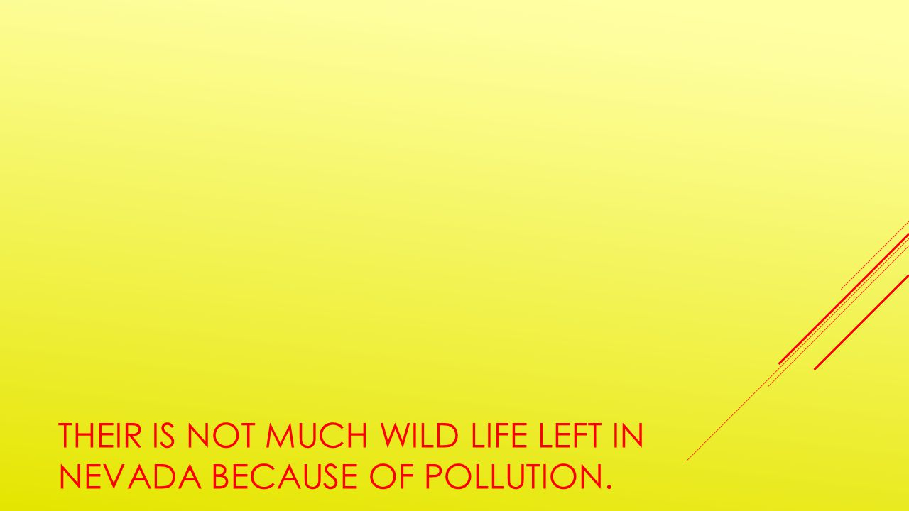 THEIR IS NOT MUCH WILD LIFE LEFT IN NEVADA BECAUSE OF POLLUTION.