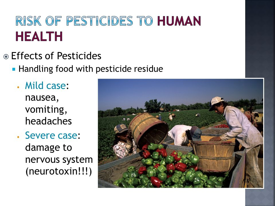  Effects of Pesticides  Handling food with pesticide residue Mild case: nausea, vomiting, headaches Severe case: damage to nervous system (neurotoxin!!!)