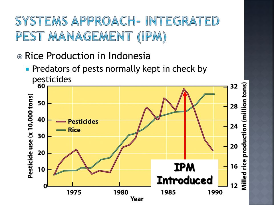 Rice Production in Indonesia  Predators of pests normally kept in check by pesticides IPM Introduced