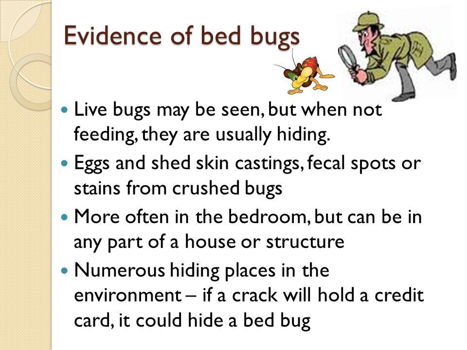 bed bugs 101 el paso county public health communicable disease
