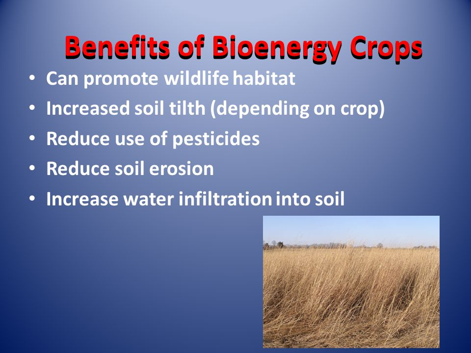 Benefits of Bioenergy Crops Can promote wildlife habitat Increased soil tilth (depending on crop) Reduce use of pesticides Reduce soil erosion Increase water infiltration into soil
