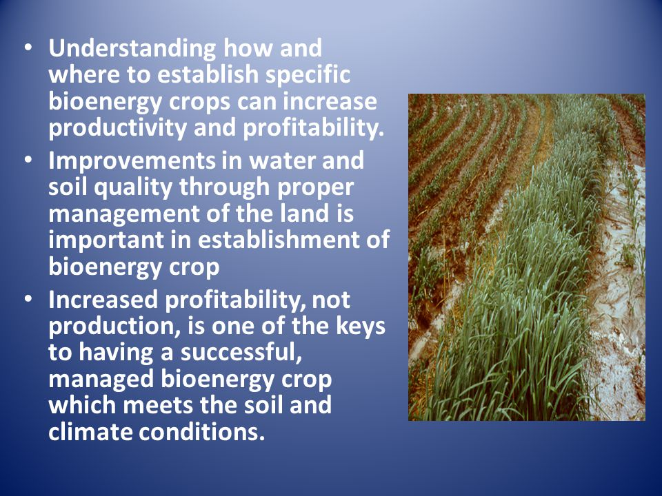 Understanding how and where to establish specific bioenergy crops can increase productivity and profitability.
