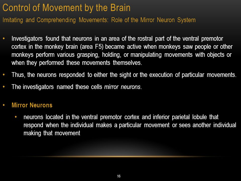 Control of Movement by the Brain 16 Imitating and Comprehending Movements: Role of the Mirror Neuron System Investigators found that neurons in an area of the rostral part of the ventral premotor cortex in the monkey brain (area F5) became active when monkeys saw people or other monkeys perform various grasping, holding, or manipulating movements with objects or when they performed these movements themselves.