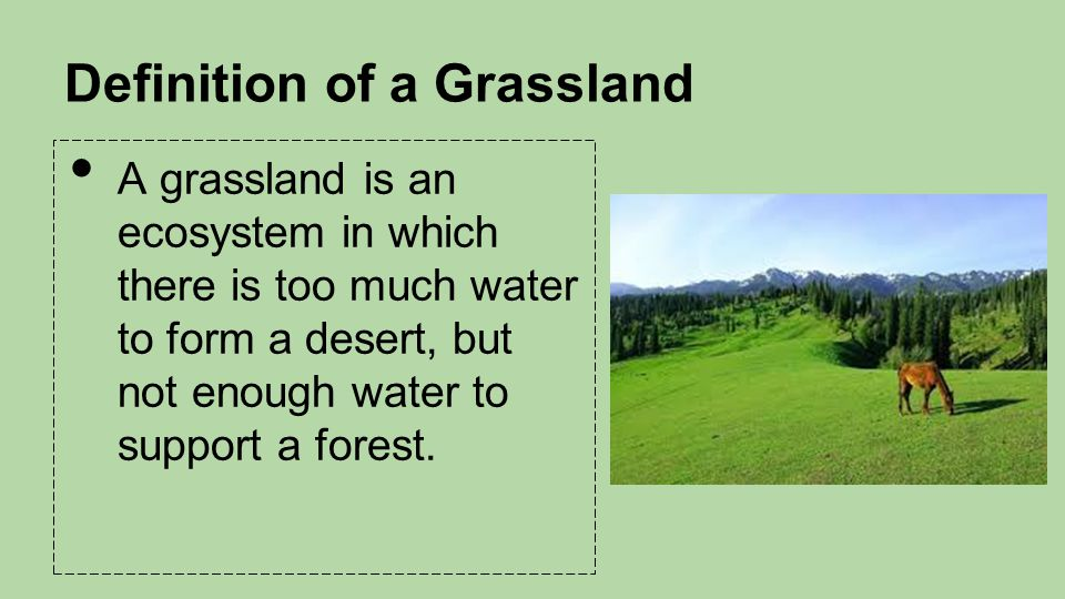 Grasslands Chapter 8 By Jeremy Dan Divico Will Tiffani Ppt