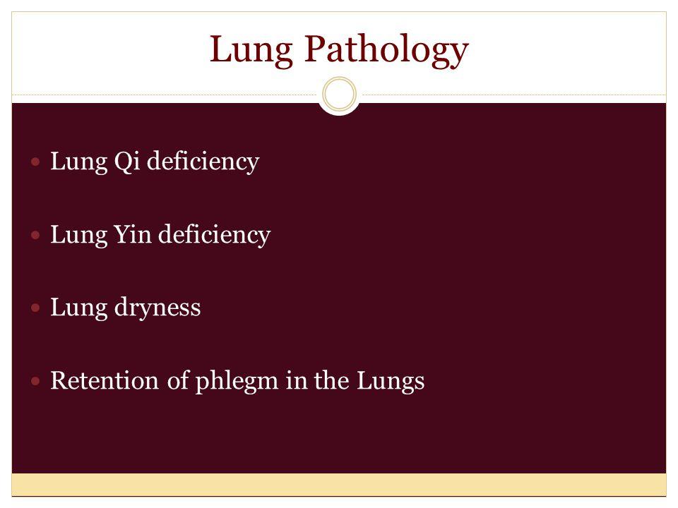 Paired Organ Systems Kidneys / Urinary-Bladder Liver