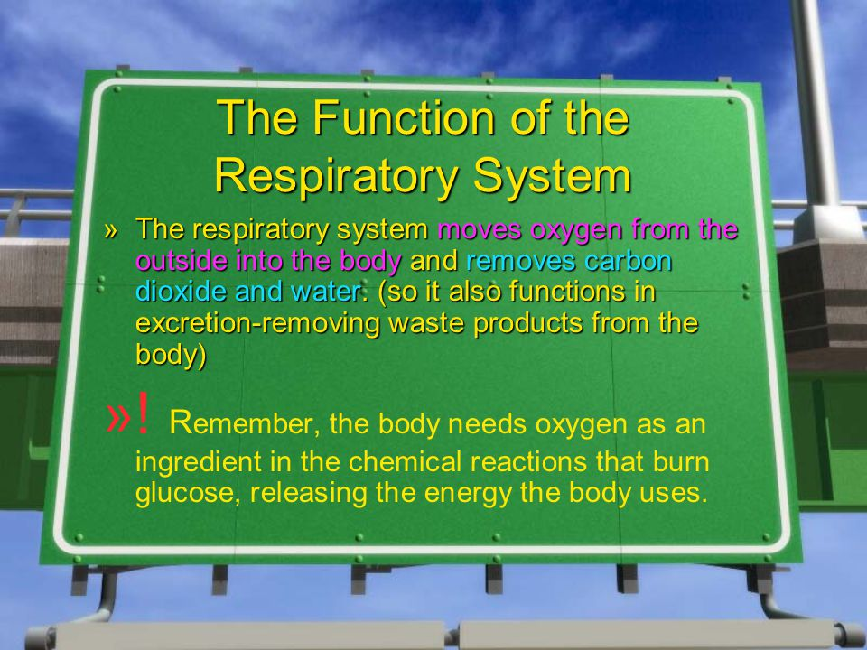 The Function of the Respiratory System »The respiratory system moves oxygen from the outside into the body and removes carbon dioxide and water.