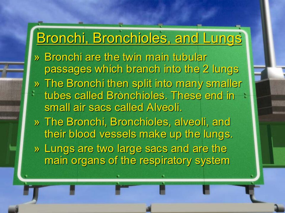 Bronchi, Bronchioles, and Lungs »Bronchi are the twin main tubular passages which branch into the 2 lungs »The Bronchi then split into many smaller tubes called Bronchioles.