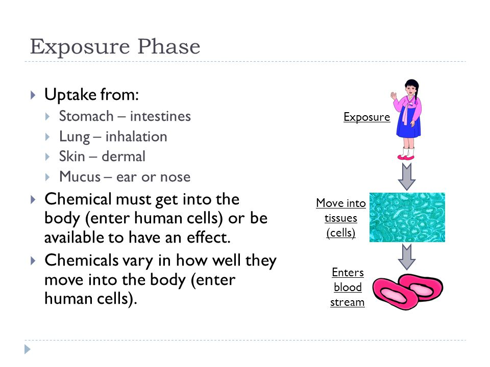 Exposure Phase  Uptake from:  Stomach – intestines  Lung – inhalation  Skin – dermal  Mucus – ear or nose  Chemical must get into the body (enter human cells) or be available to have an effect.