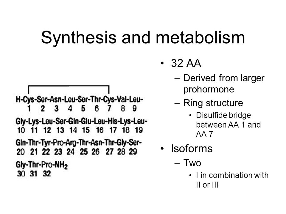 Synthesis and metabolism 32 AA –Derived from larger prohormone –Ring structure Disulfide bridge between AA 1 and AA 7 Isoforms –Two I in combination with II or III