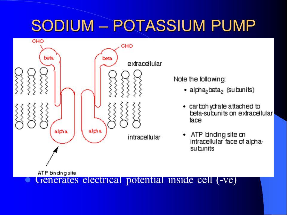 the sodium potassium pump functions to pump