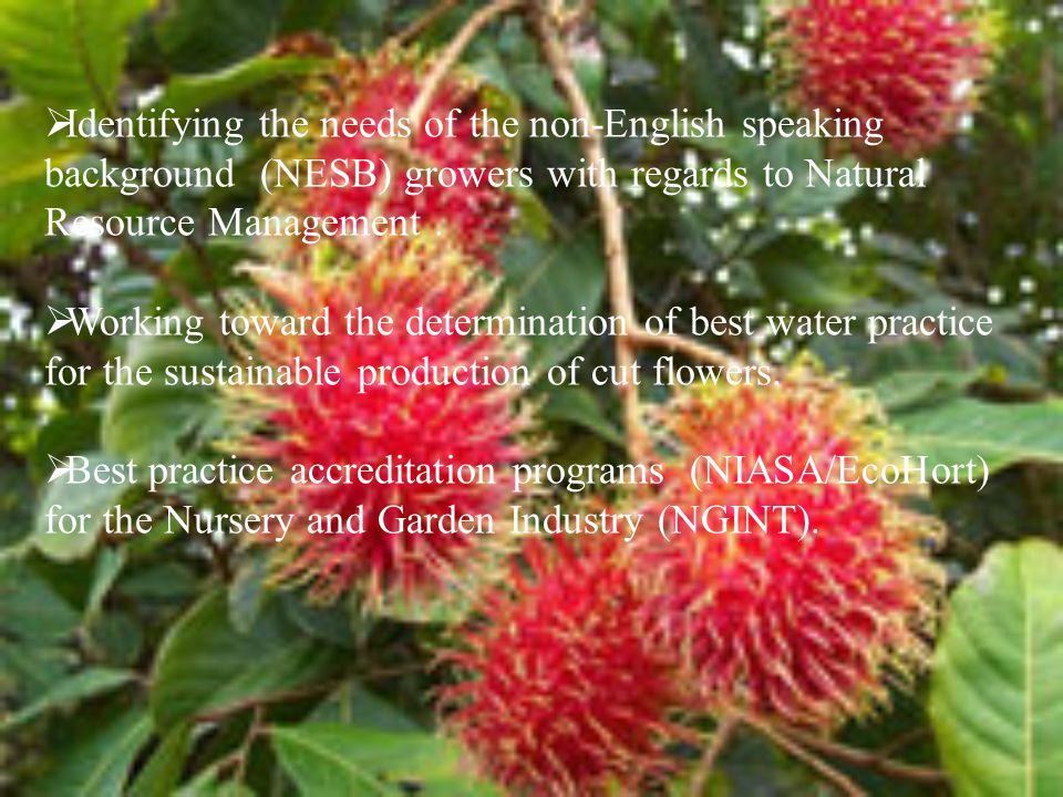  Identifying the needs of the non-English speaking background (NESB) growers with regards to Natural Resource Management.