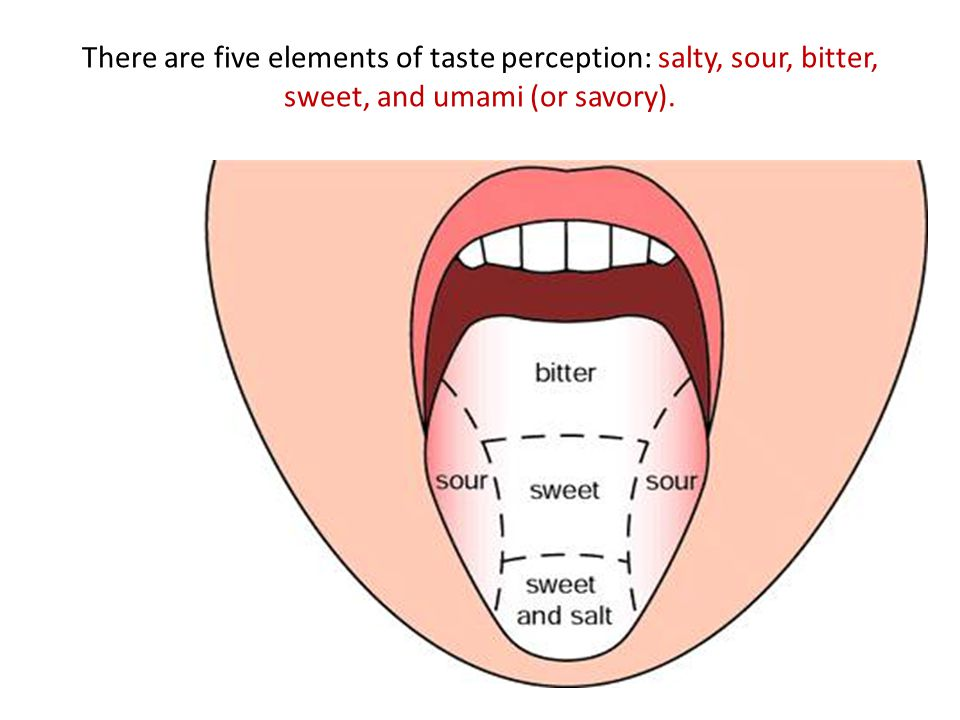 The Human Tongue The Tongue The Various Tasks Our Tongue Is