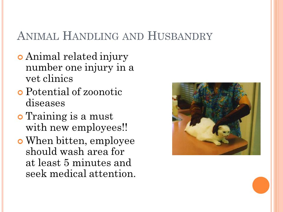 A NIMAL H ANDLING AND H USBANDRY Animal related injury number one injury in a vet clinics Potential of zoonotic diseases Training is a must with new employees!.