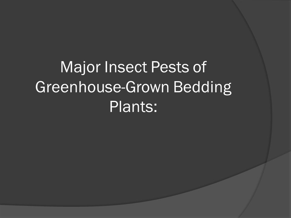 Major Insect Pests of Greenhouse-Grown Bedding Plants: