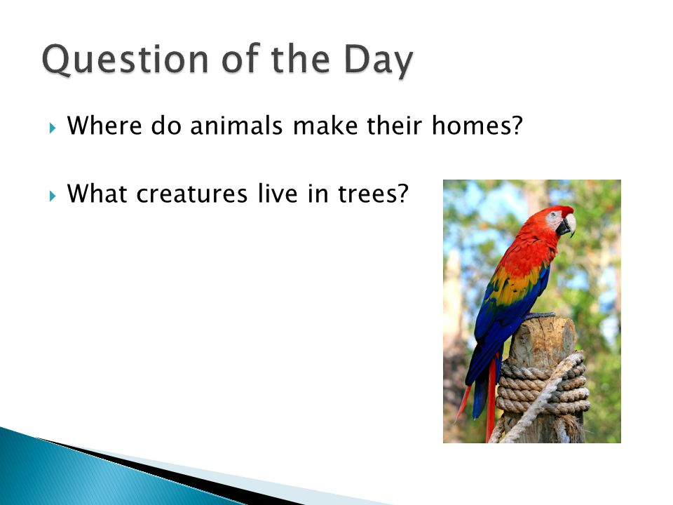  Where do animals make their homes  What creatures live in trees