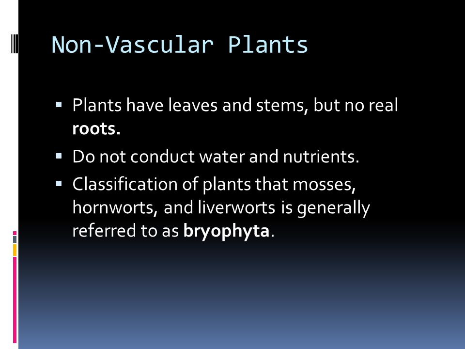 Non-Vascular Plants  Plants have leaves and stems, but no real roots.