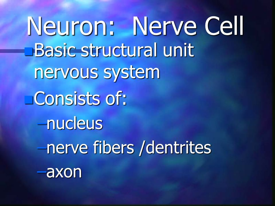 Neuron: Nerve Cell n Basic structural unit nervous system n Consists of: –nucleus –nerve fibers /dentrites –axon