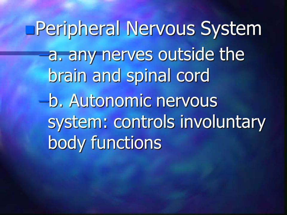 n Peripheral Nervous System –a. any nerves outside the brain and spinal cord –b.