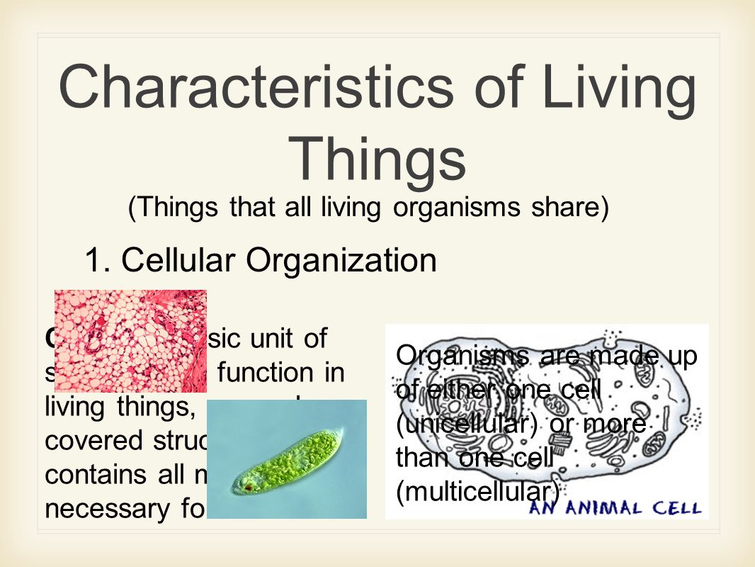2 Characteristics Of Living Things