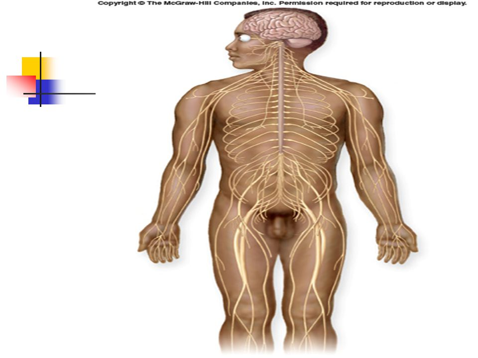 what are the major functions of the nervous system