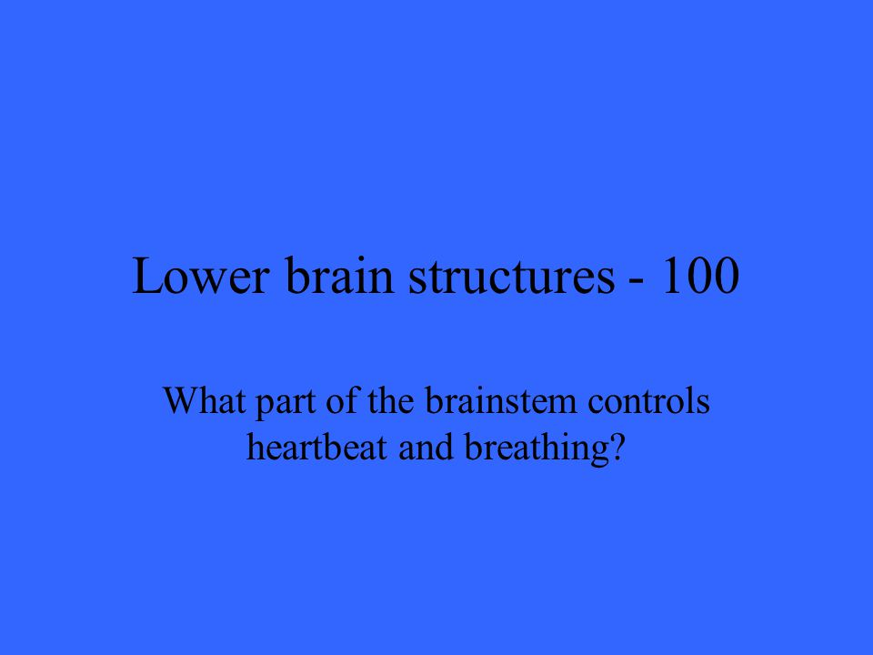 Lower brain structures What part of the brainstem controls heartbeat and breathing