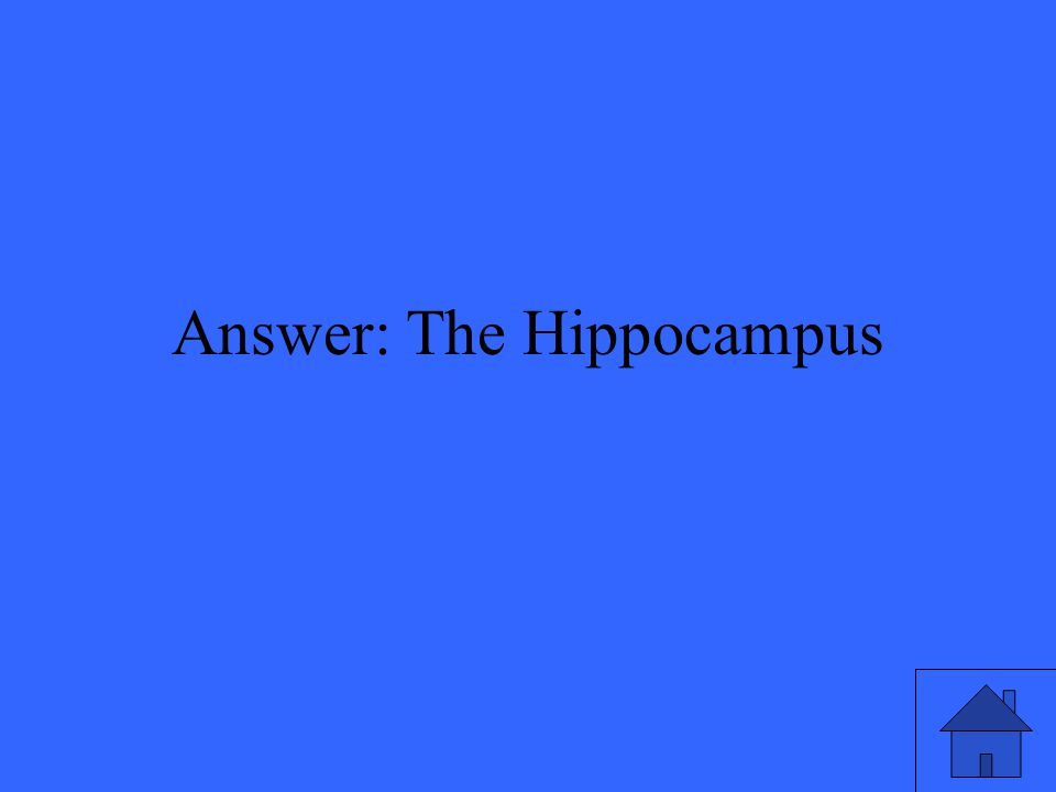 Answer: The Hippocampus