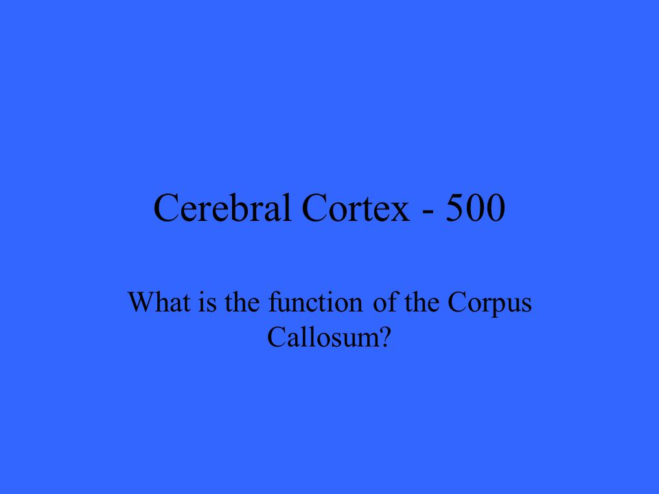 Cerebral Cortex What is the function of the Corpus Callosum