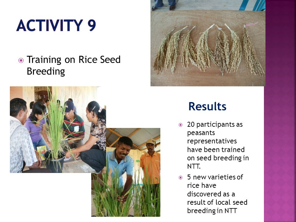 Results  Training on Rice Seed Breeding  20 participants as peasants representatives have been trained on seed breeding in NTT.