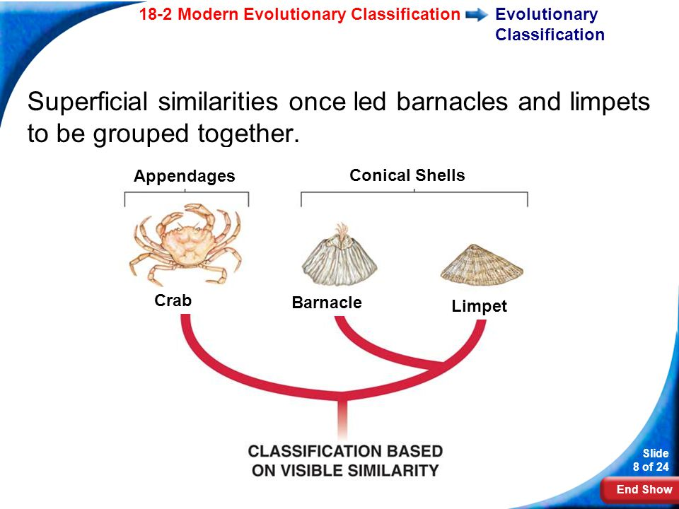 Limpet Crab Barnacle Diagram Diy Enthusiasts Wiring Diagrams