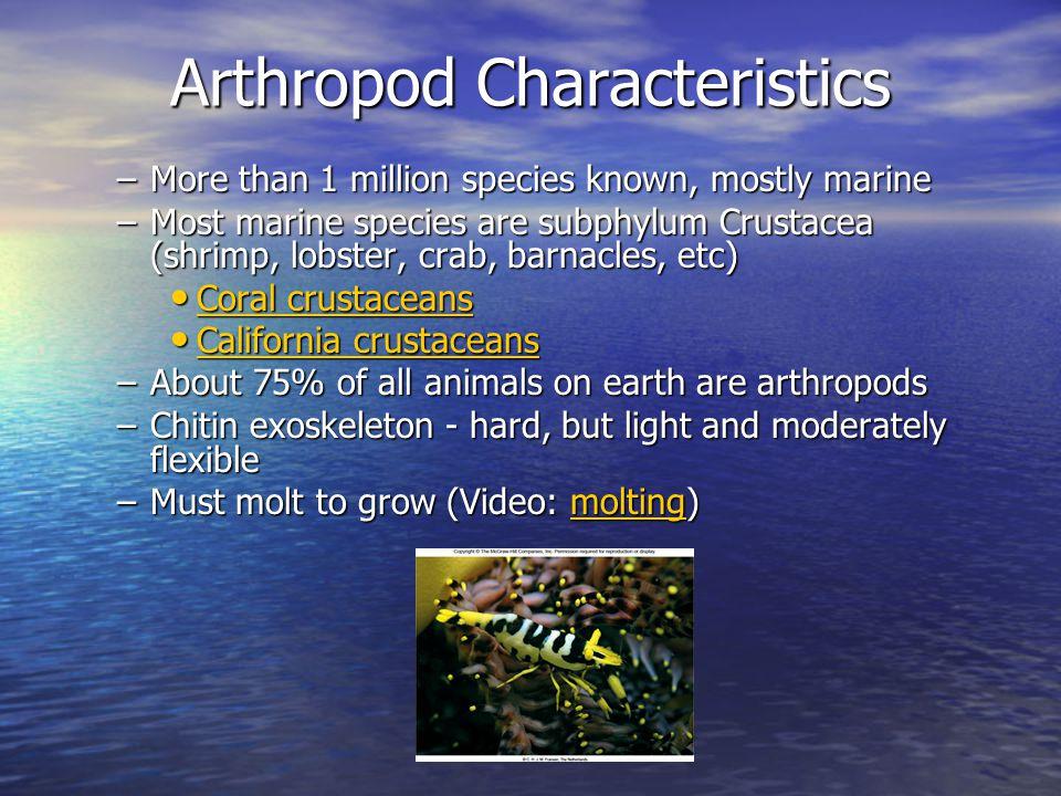 Phylum Arthropoda Photo Credits