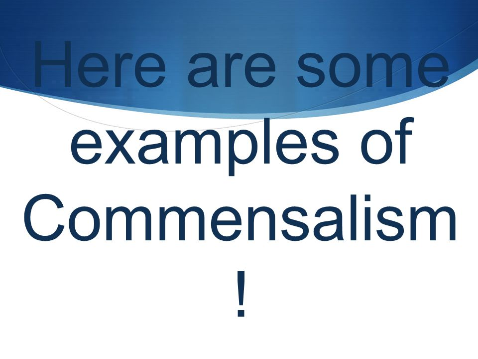 2 Here Are Some Examples Of Commensalism
