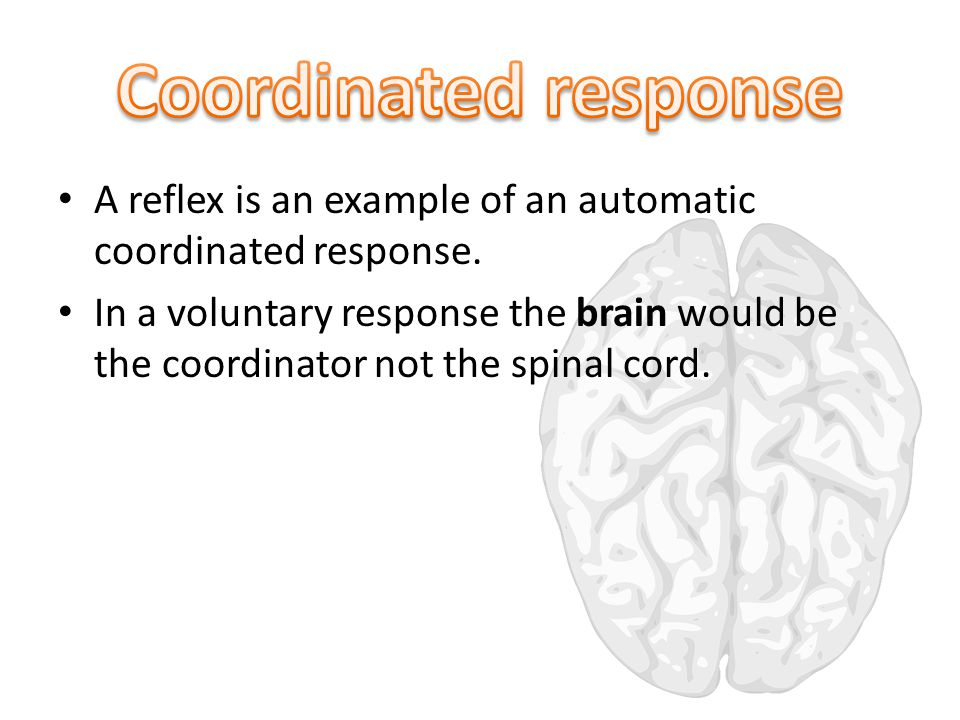A reflex is an example of an automatic coordinated response.